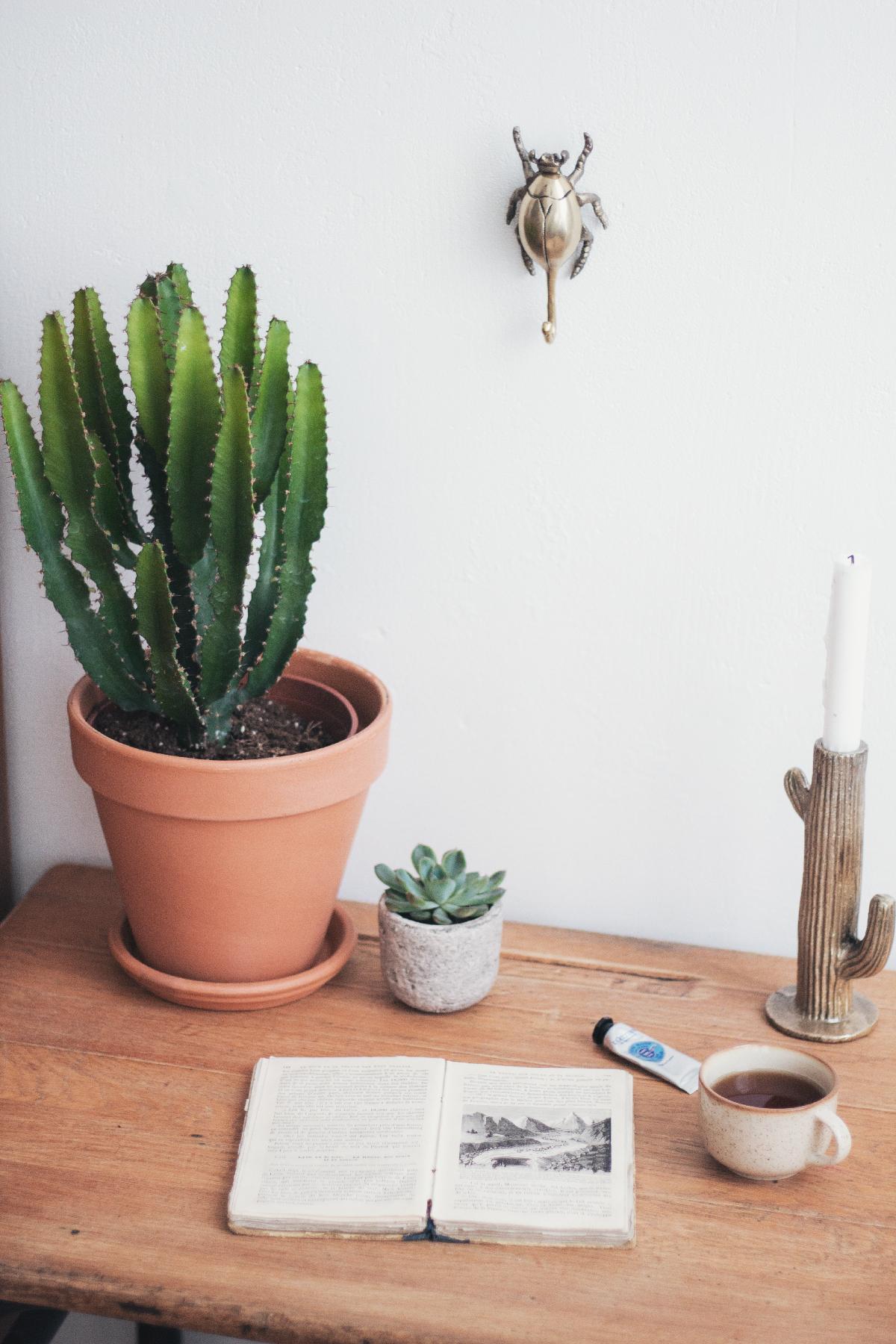 Cactus-31.012