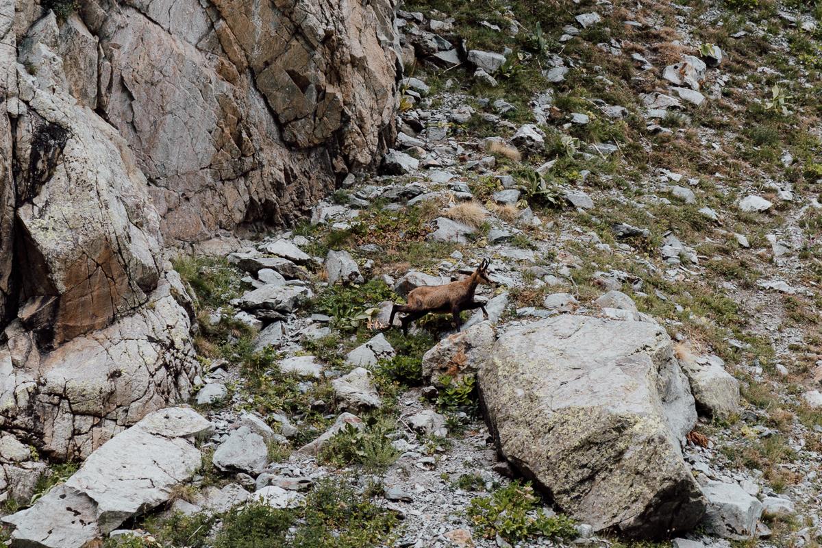 glacier-noir-hautes-alpes-37