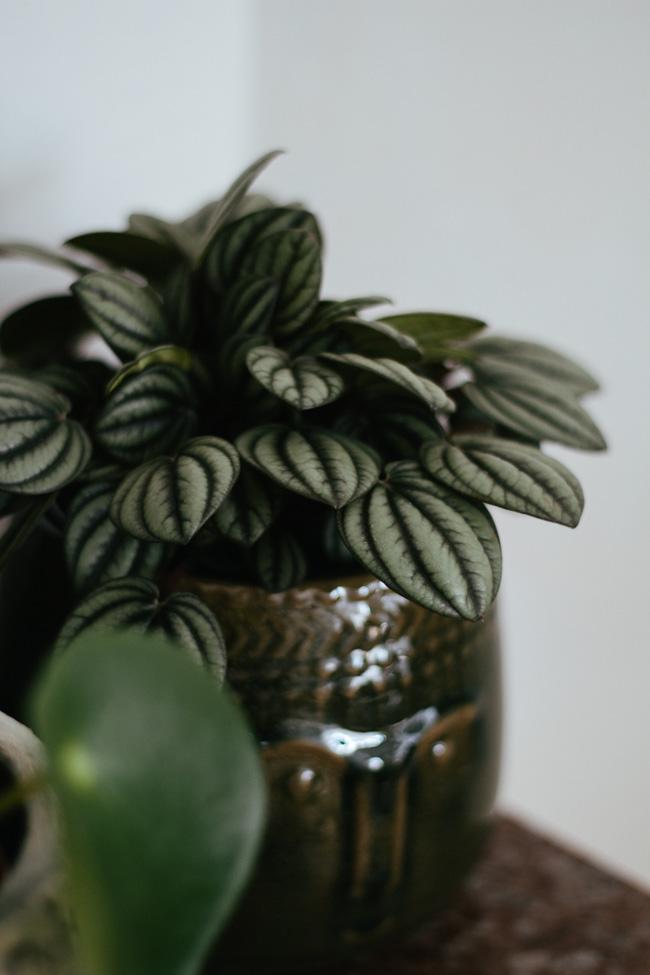 Petit guide des plantes faciles d 39 entretien carnet for Ikea plantes d interieur