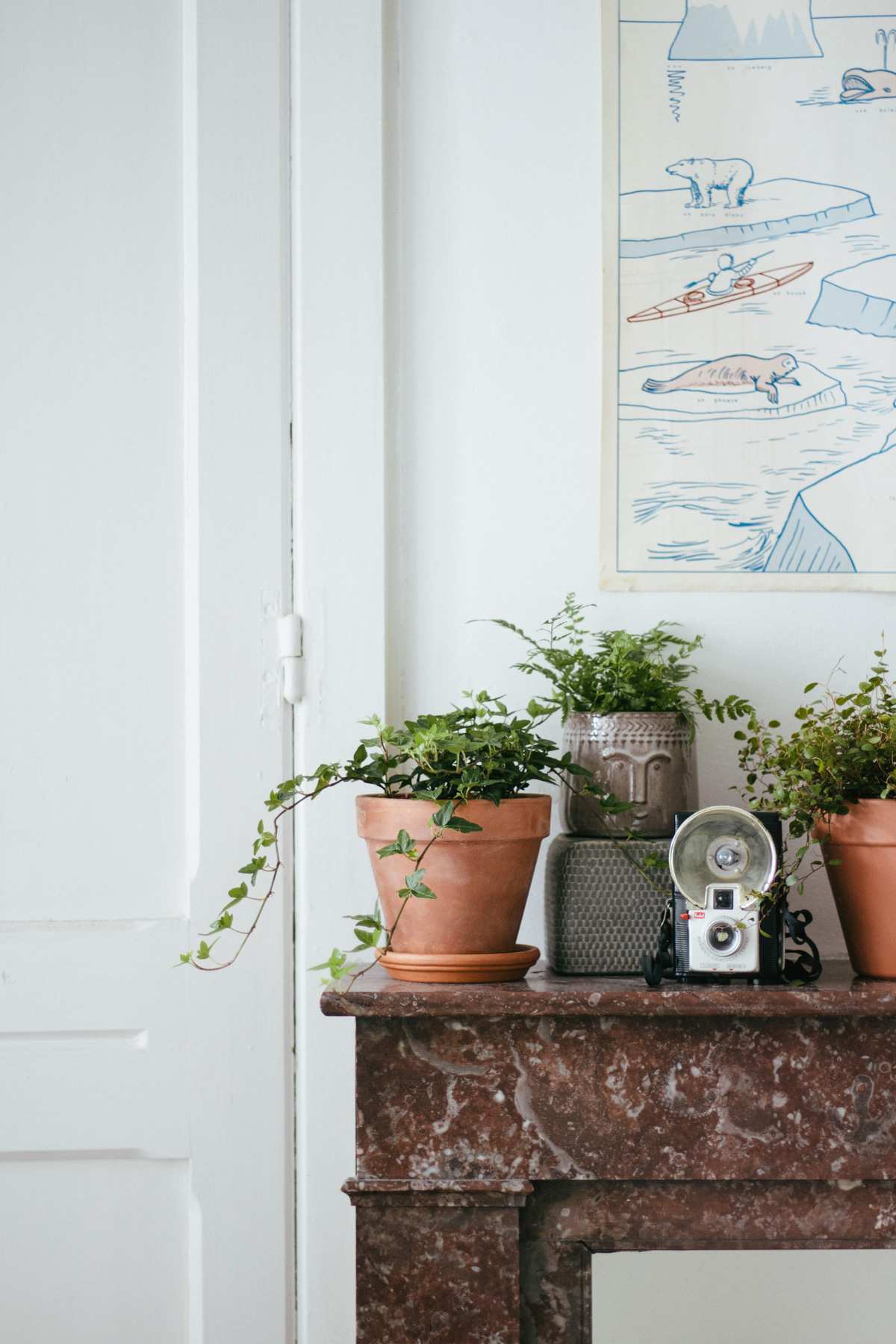 guide-plantes-interieur-17