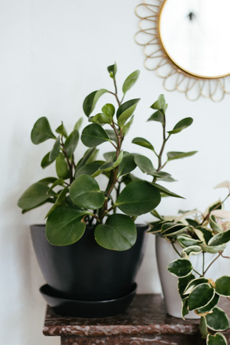 guide-plantes-interieur-3