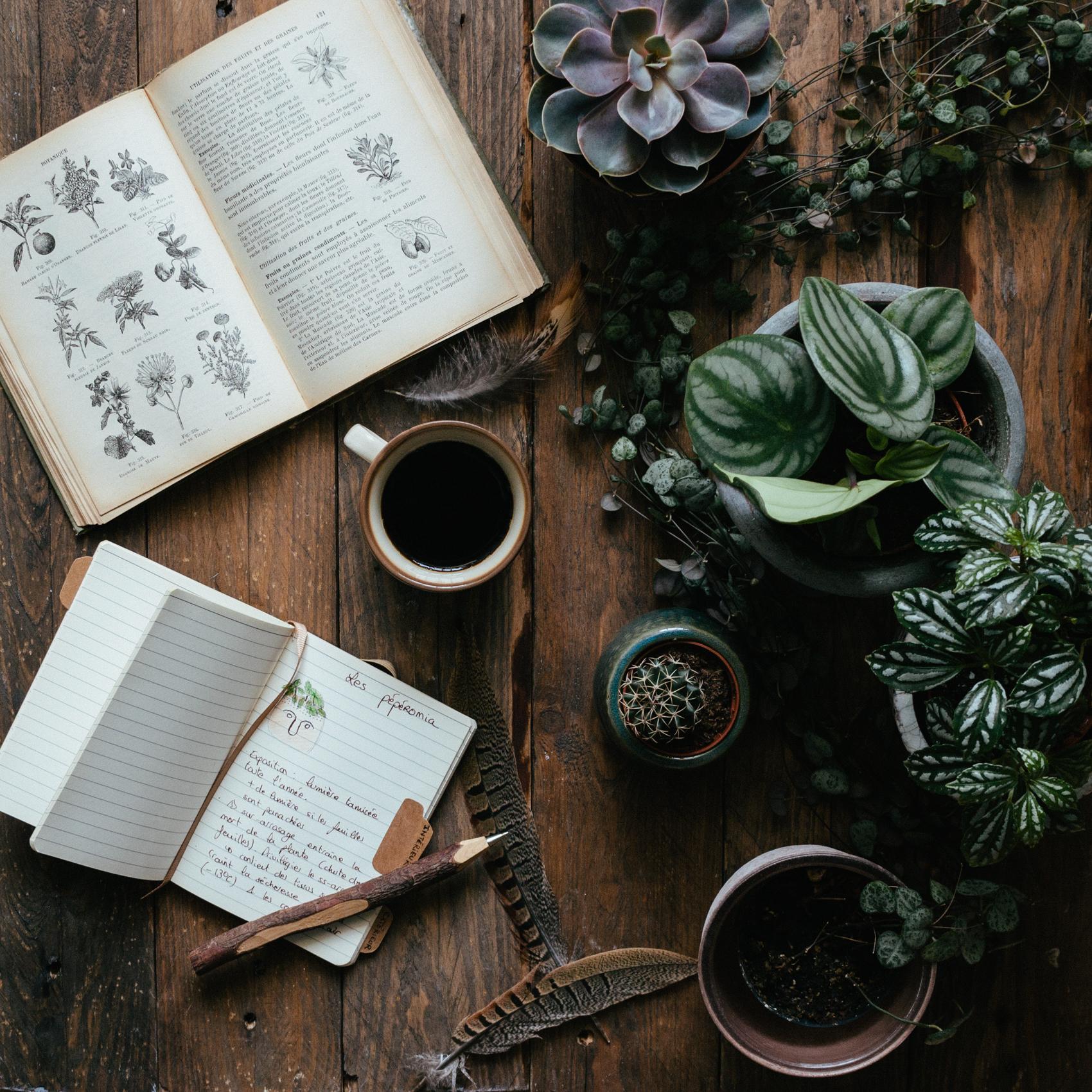 Petit guide des plantes faciles d entretien – Carnet de printemps 1dfcbf2279c0