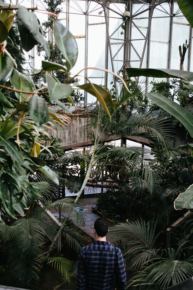 jardin des plantes lille serre 2 - Jardin Des Plantes Lille