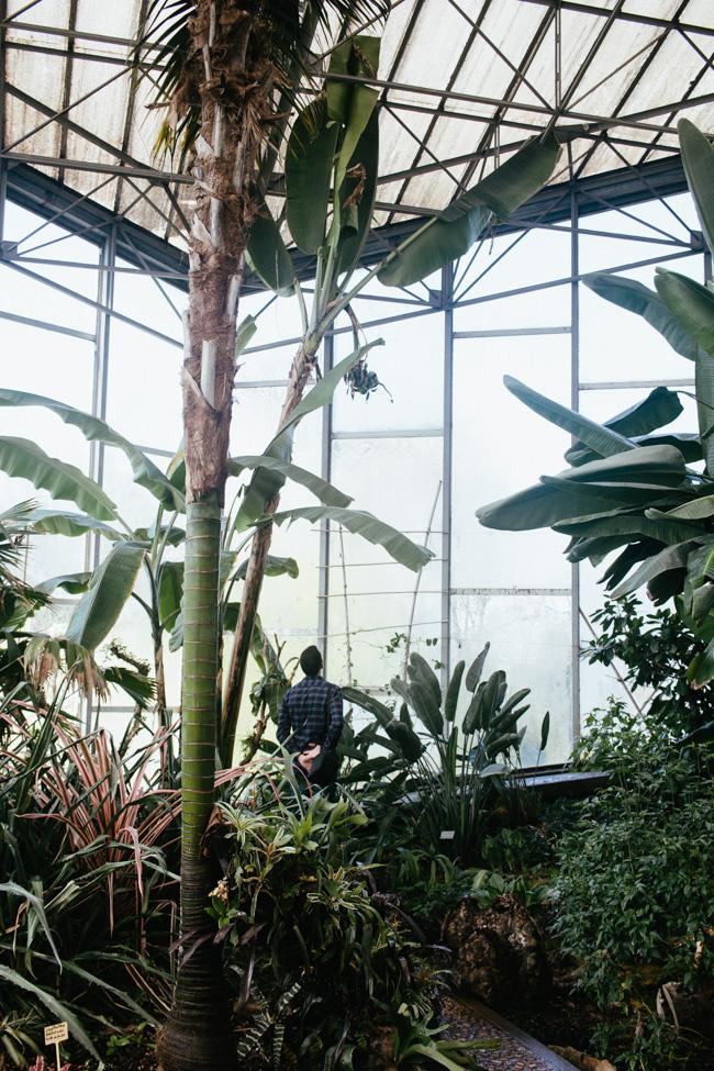 cest ce besoin qui nous a amen pousser les portes de la serre quatoriale du jardin des plantes lille - Jardin Des Plantes Lille